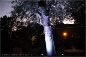 Alisha-tree-pic1-300×200[1]