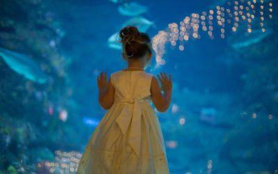Kortney & Gary Wedding at North Carolina Aquarium at Fort Fisher